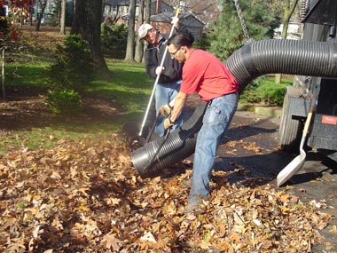 We vacuum the leaves for you